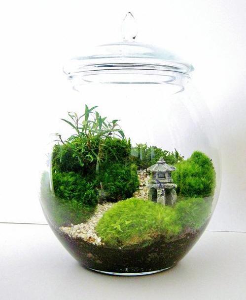 mini jardim oriental : mini jardim oriental:Terrarium Garden